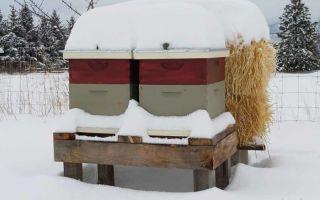 Основные правила зимовки пчел в ульях