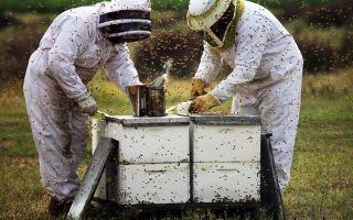 Приготовление подкормки для пчел