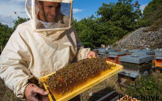 Основные методики разведения пчел