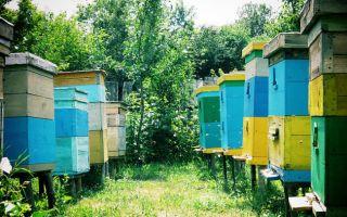 Содержание пчёл в двухкорпусном дадане