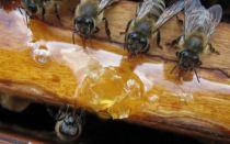 Кормление пчел старым медом