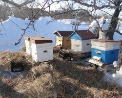 Подкормка пчел весной