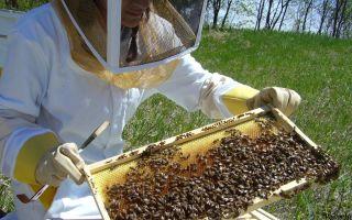 Весенние работы на пасеке с пчелами