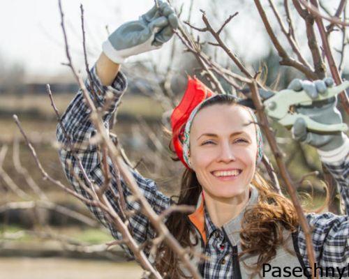 Весенний уход за яблонями
