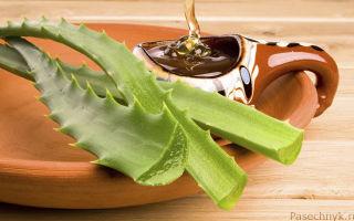 Полезные свойства алоэ с медом