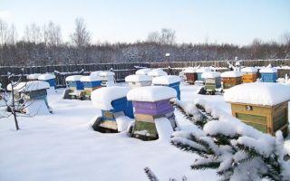 Как происходит зимовка пчел в ульях без дна