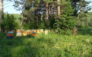 Пчеловождение в ульях на рамку 145