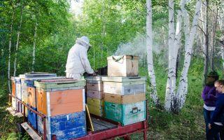 Методика двухматочного содержания пчел в ульях