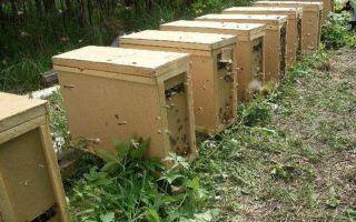 Строительство пчелопакета своими руками