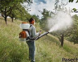 Весенняя обработка яблонь от болезней и вредителей