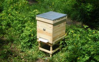 Как содержать пчел в однокорпусных ульях
