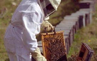 Ревизия пчелиных семей осенью