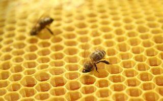 Сушь для пчел: ее значение в пчеловодстве