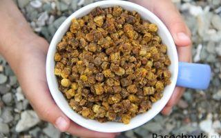 Чем полезна пчелиная перга для женщин