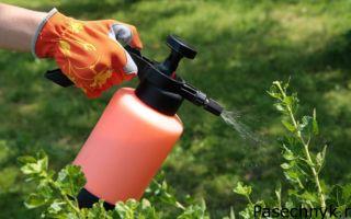 Когда и чем обработать яблоню от болезней