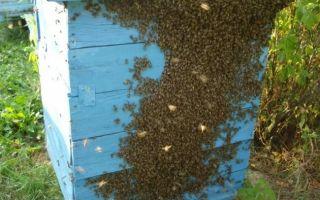 Искусственные методы роения пчел