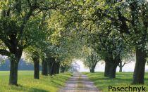 Какие яблоневые сорта подходят для выращивания в Белоруссии