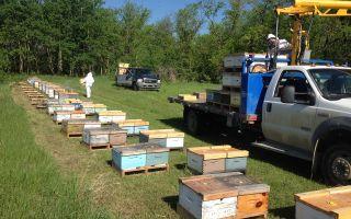 История возникновения и основные технологии пчеловодства в Канаде