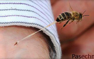 Аллергия от укуса пчелы: лечение и профилактика