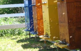 Содержание пчел в многокорпусном улье с рамкой