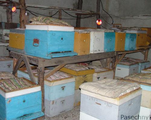 Выставка пчел из зимовника весной