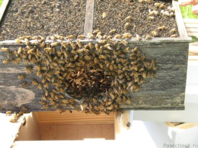 пчелопакет с отверстием