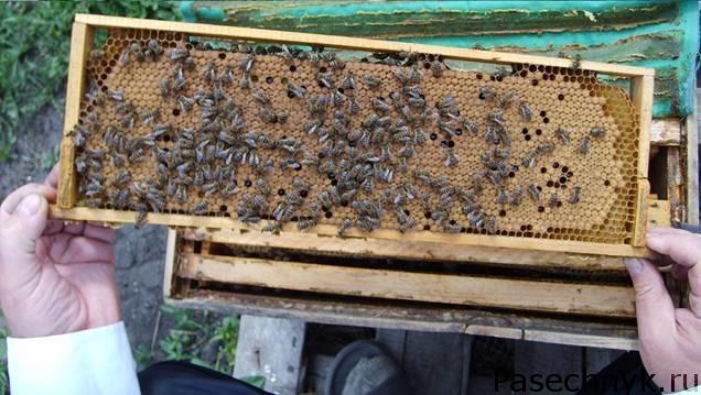 пчелы на рамке 145