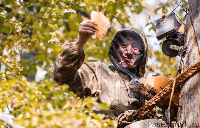 бортник на дереве