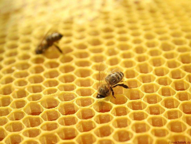 сушь для пчел