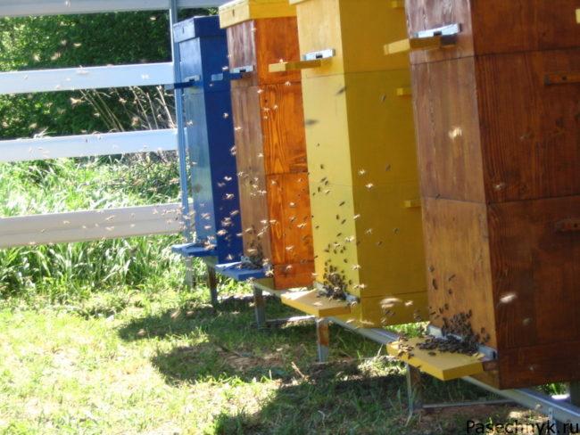улья и пчелы