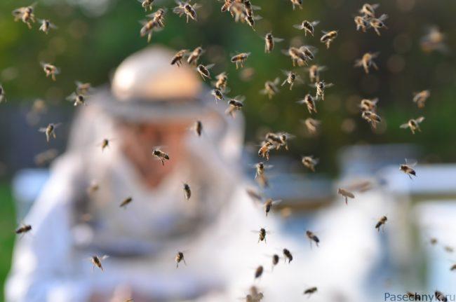 пчелы на фоне пасечника