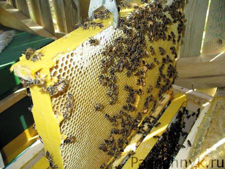 пластиковые рамки для пчел