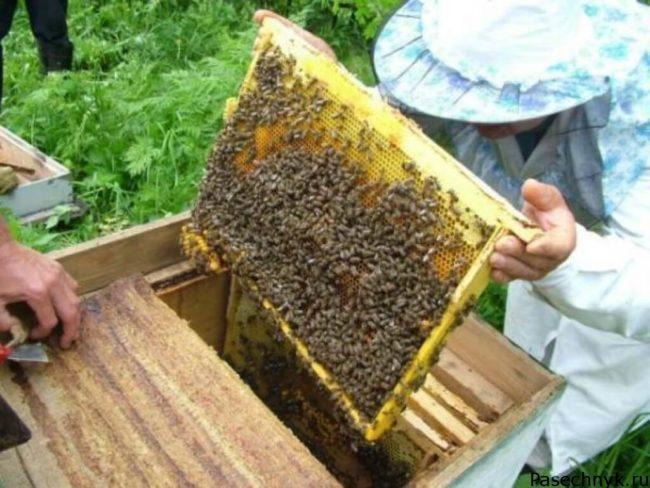 проверка пчелиного улья
