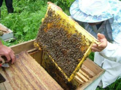 Пчелиный медосбор