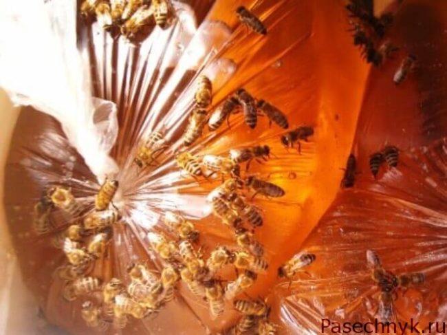 пчелы и пакет с сиропом