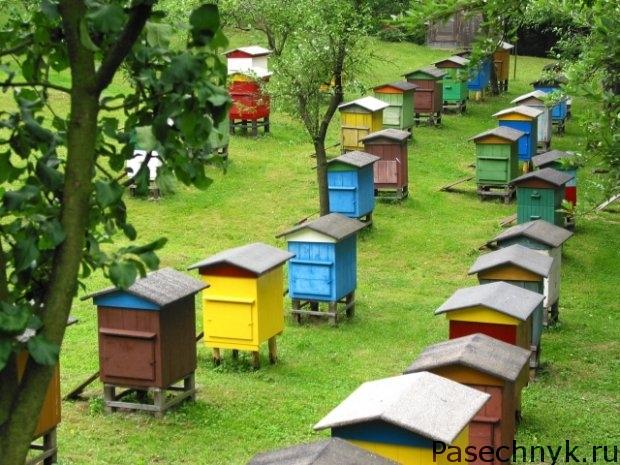 много пчелиных улей