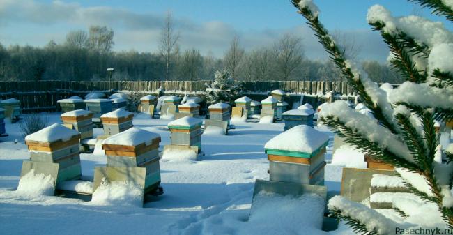 Пасека в конце зимы