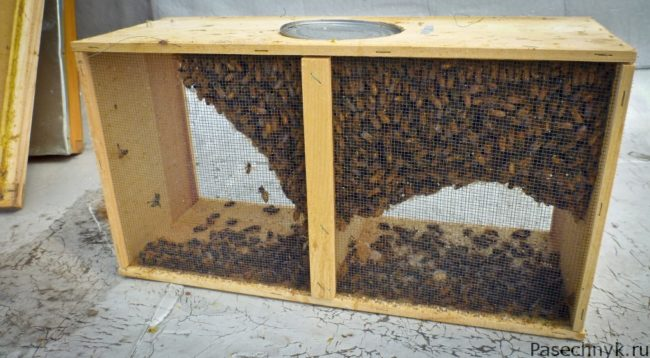 бессотовый пчелопакет