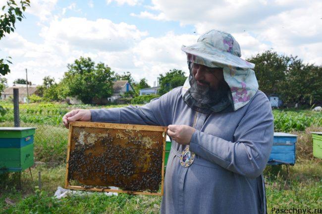 мед с монастырской пасеки