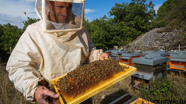 разведение пчел
