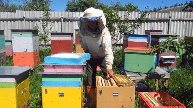 Пересадка пчел в чистый улей