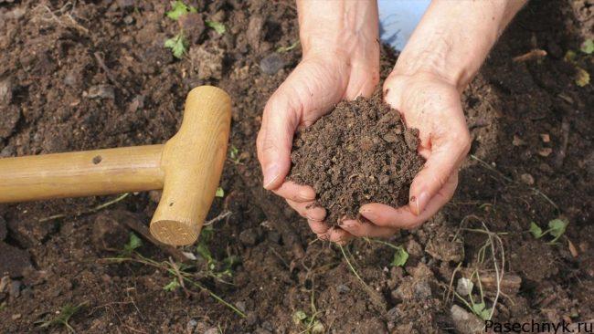 посадка в почву