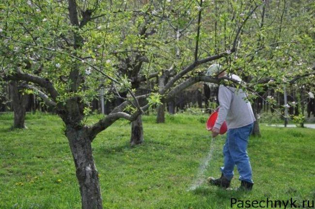 подкормка яблони в саду
