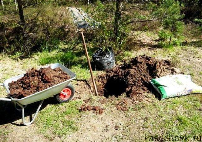 Подготовка ямы для посадки дерева