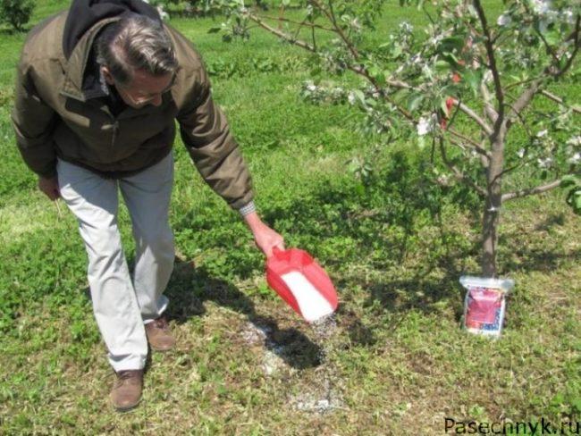 Подкормка яблонь удобрениями
