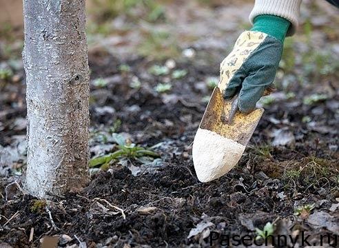 подкормка деревьев
