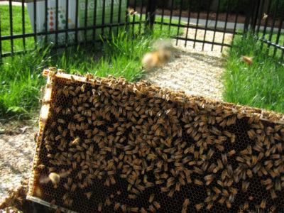 рамка с пчелами в саду