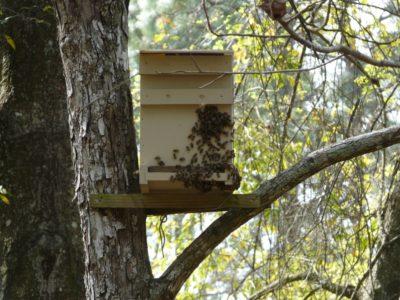 ловушка с пчелами