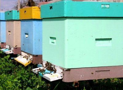 пчелы и ульи из пенополистирола
