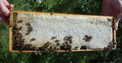 пчелы и рамка